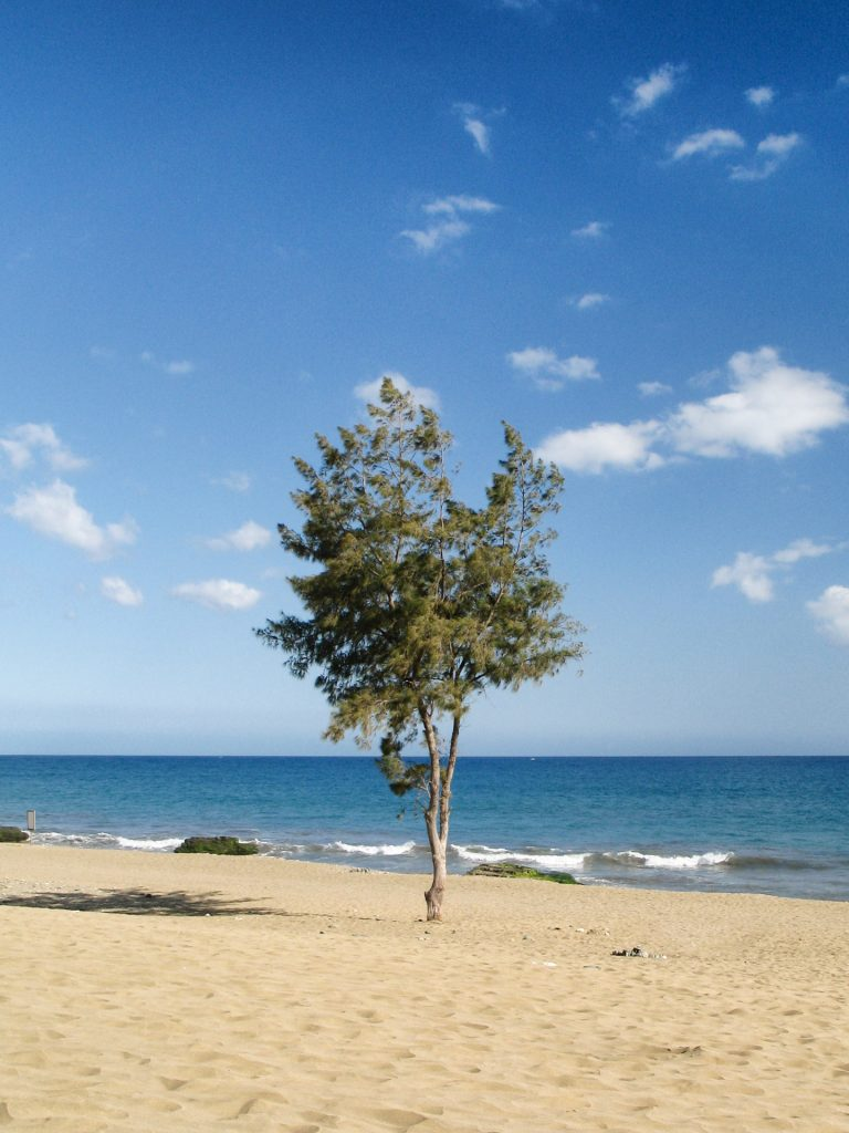 Tree at Maspalomas Beach